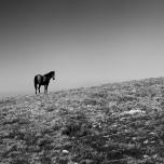 Фотограф: Сава Чапанов